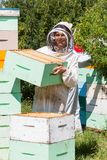 Portrait Of Beekeeper Working At Apiary Royalty Free Stock Photo