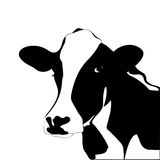 Portrait Big Black And White Cow Stock Photos