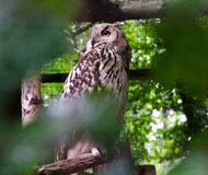 Owl in the zoo royalty free stock photos