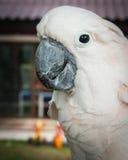 Portrait of a big rose parrot, Koh Samui, Thailand Stock Photography