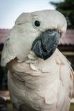 Portrait of a big rose parrot, Koh Samui, Thailand Stock Images