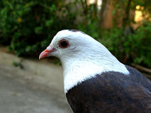 Portrait of bird. Side portrait of bird with white head markings outdoors Stock Photo
