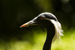 A portrait of a bird Royalty Free Stock Photo
