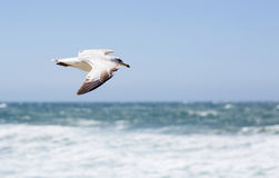 Portrait of birds flying against the blue sky and ocean. Royalty Free Stock Image