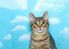 Portrait of a black and brown tabby cat. Looking quizzically at the viewer. Blue sky background with clouds Stock Photos