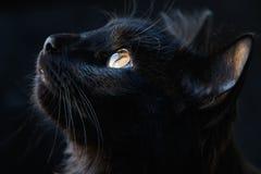 Portrait of a black cat.  stock photo