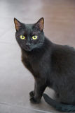Portrait of a black cat. Black cat with a yellow eyes sitting on the floor Stock Photo