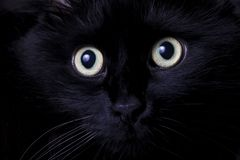 Portrait of a black cat Stock Photos