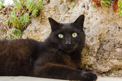 Portrait of black cat Stock Photography