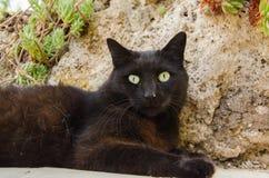 Portrait of black cat stock photography