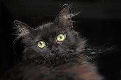 Portrait of a black cat Stock Images