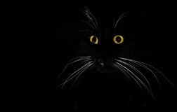 A portrait of a black cat in a dark room. Isolated on black Royalty Free Stock Image