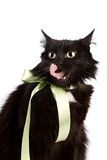 Portrait of a black cat with a green tape Stock Images