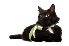 Portrait of a black cat with a green tape Royalty Free Stock Image
