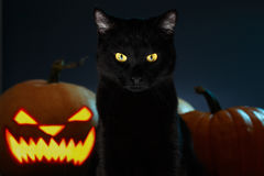 Portrait of Black Cat with Halloween pumpkin on Background Stock Images