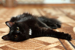 Portrait of black cat relaxing on carpet Stock Photos