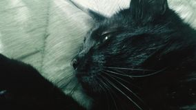 Portrait of a black cat. Thinking Royalty Free Stock Photos
