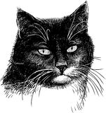 Portrait of a black cat Stock Images