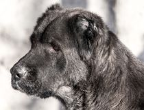 Portrait of a black dog on the nature Royalty Free Stock Images