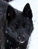 Portrait of a black dog Stock Photos