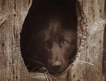 Portrait of a black dog Stock Image