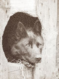 Portrait of a black dog Royalty Free Stock Photo