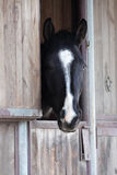 Portrait of black horse Royalty Free Stock Photography
