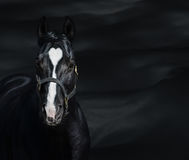 Portrait of black horse with heart mark. Unigue colored Stock Image
