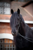 Portrait of a black horse. Royalty Free Stock Photography