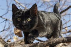 Portrait of a black kitten against a background of twisted branches and sky. royalty free stock images