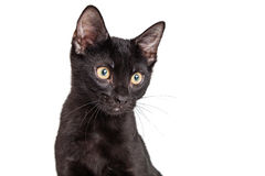 Portrait Black Kitten With Copy Space Stock Photography