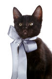 Portrait of a black kitten with a gray bow. Stock Photography