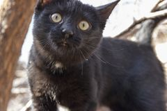 Portrait of a black kitten with a white mark on the chest. royalty free stock photos