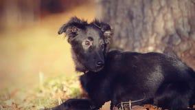Portrait of a black mongrel puppy Stock Photos
