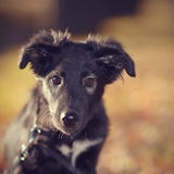 Portrait of a black not purebred puppy Stock Photo
