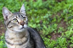 Portrait of black tabby cat on outdoors stock photography