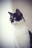 Portrait of a black-and-white cat. Stock Photography