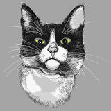Portrait of a black and white cat. Stock Photos