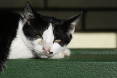 Portrait of black and white cat laying on bench Stock Photos