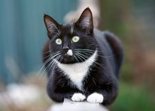 Portrait of a black and white cat sitting on fence stock image