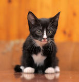 Portrait of a black and white kitten Stock Photo