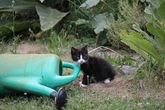 Portrait of black and white kitten in the garden. Stock Photo