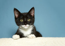 Portrait of black and white kitten Royalty Free Stock Photography