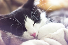Portrait of a black and white kitten Stock Images