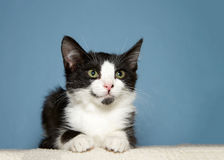 Portrait of black and white tabby kitten Royalty Free Stock Photos
