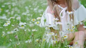Portrait. Blonde girl, child, sits in the grass, among the daisies, in the chamomile meadow. She admires the daisies stock video footage