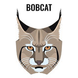 Portrait of bobcat vector illustration isolated on white. Cat specie. With barred and spotted coat. Closeup of wild animal Royalty Free Stock Photos