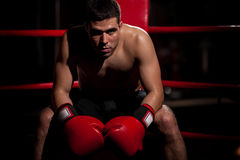 Portrait of a boxer in a ring Royalty Free Stock Photo
