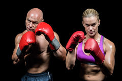 Portrait of boxers with gloves Stock Image