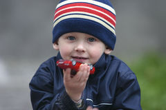 Portrait of a boy. Boy with a favourite car model stock photos